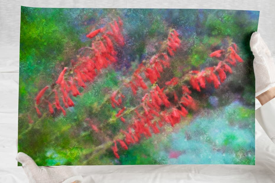 Holding an art print of red flower stalks against a green background