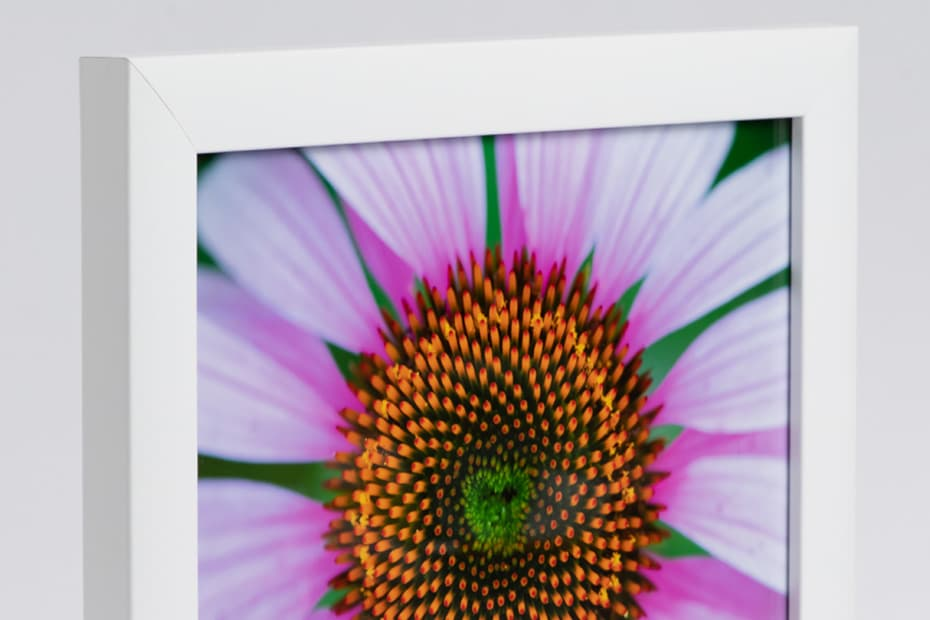 Framed 8x10 print of a flower in a white frame